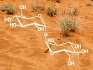 Trehalose Molucles