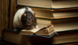 A Smarter Rat - Click to enlarge